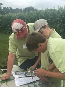 Three youth crop scouters looking at weeds